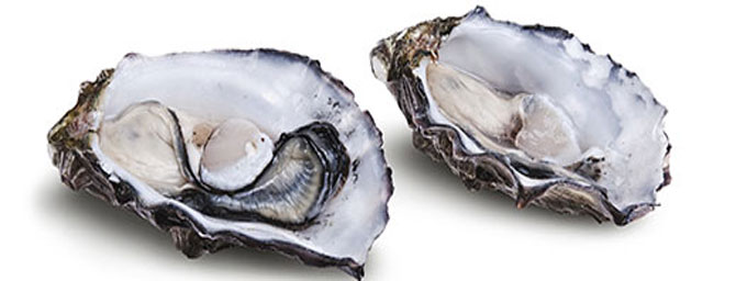 San Francisco Events - Oysterfest - Live Music & Wine Pairings - May 7