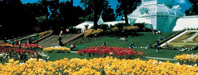 The San Francisco Botanical Garden