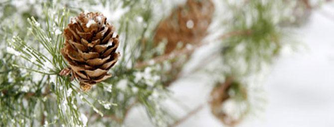 Union Square Holiday Tree Lighting: November 28, 2014